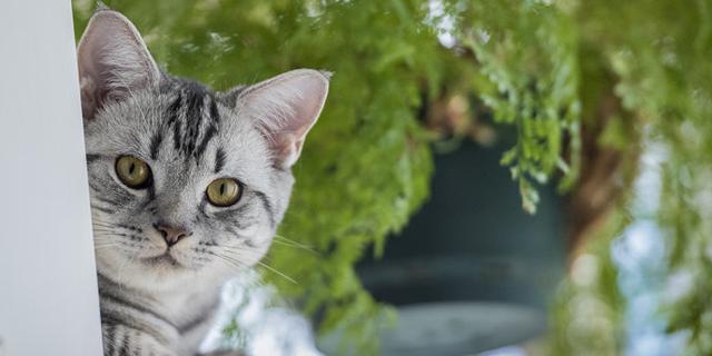 萌翻啦!两只猫咪的成长记录