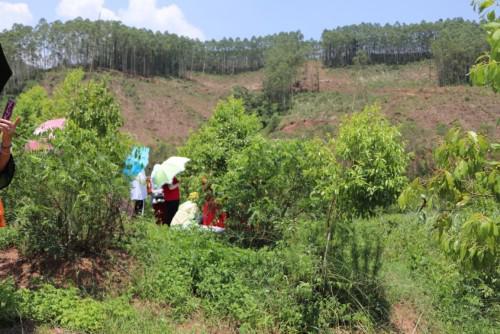广西万亩檀香,未来10年国际市场檀香木的价格将再度飙升
