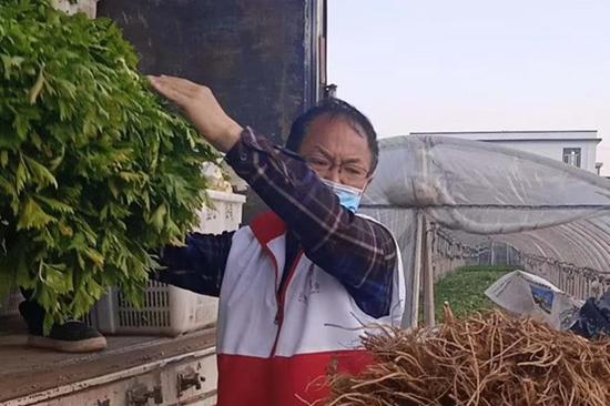 金常德在田间搬运蔬菜